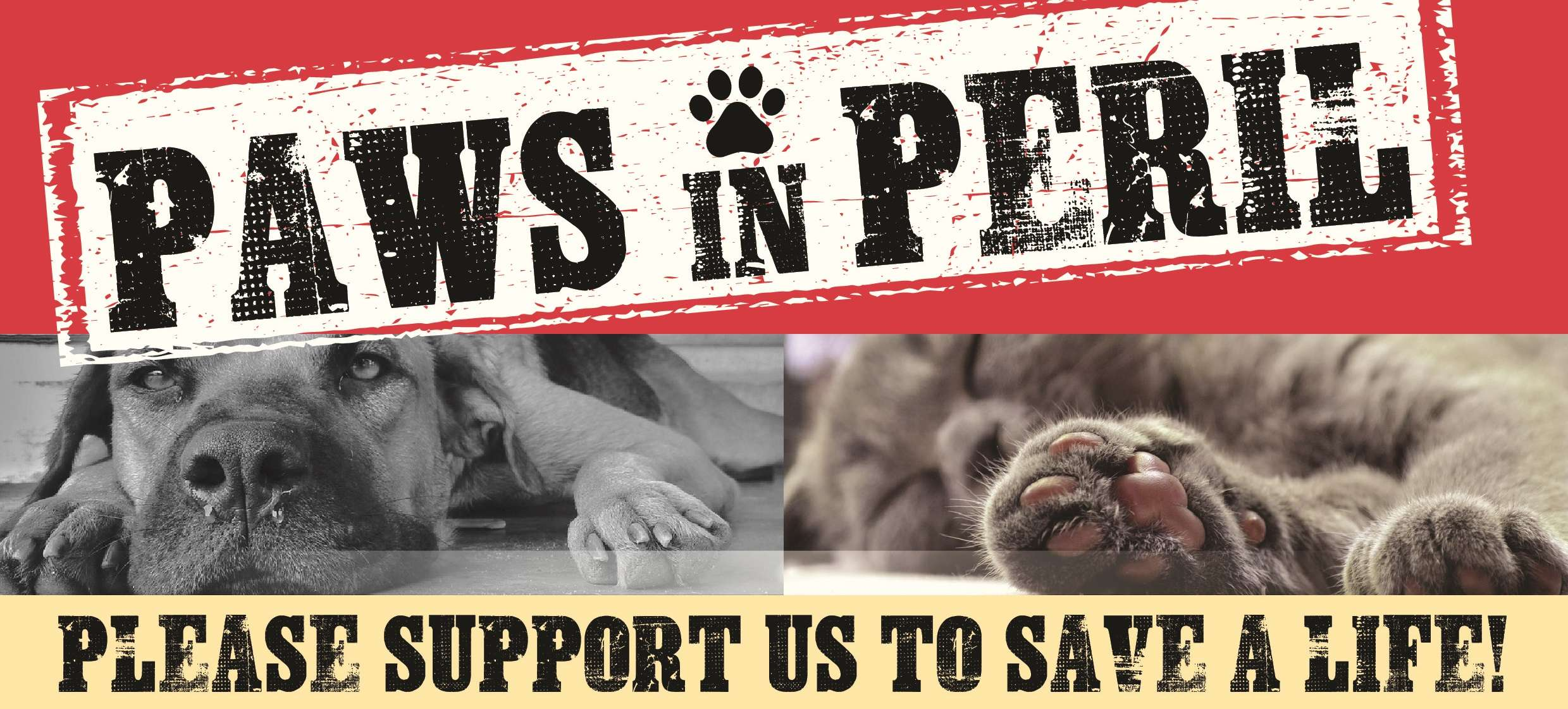 001e39b3e85f9c Paws in Peril! – Please save our sanctuary - Holly Hedge Animal ...